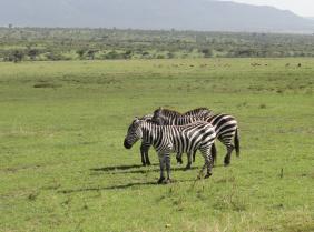 kenya tours1