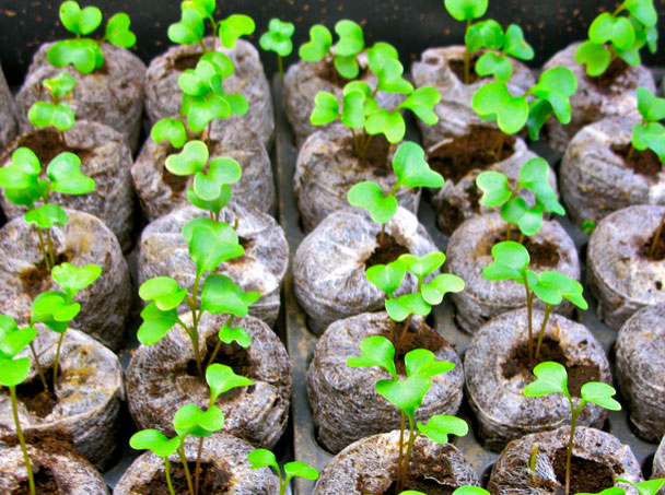 Soil Cares Initiative in Kenya farming business ideas in Kenya,