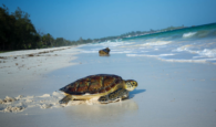Watamu Turtles and best hotels