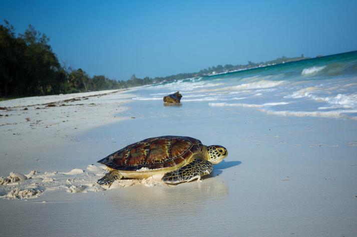 Watamu Turtles and best hotels
