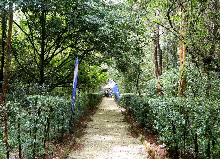 Nairobi Arboretum Nature Trail