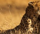 How to plan a visit to Maasai Mara Kenya, Safari trip package preparedness