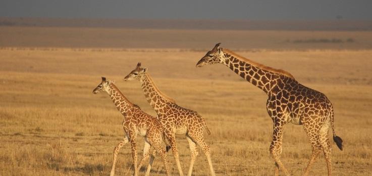 Maasai Mara beautiful animals