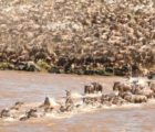 Places to visit with your family on holiday in Kenya: Friendly destination packages