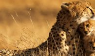 Best December Holiday Family Destinations in Kenya (Safari Tours)