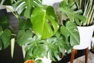 Things to Consider When Choosing Indoor Plants