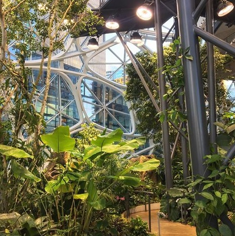 Walkways are some of the features inside the Amazon Spheres